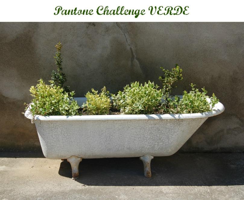 Pantone Challenge Verde
